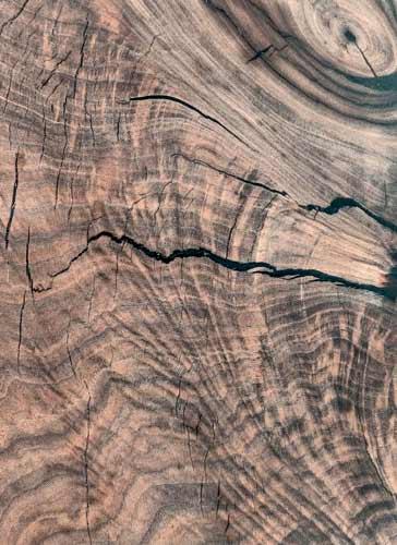Black Walnut Texas Pecan Wood