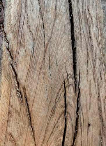 Live Oak Texas Pecan Wood