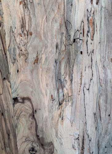 Types of Wood Spalted Pecan Texas Pecan Wood