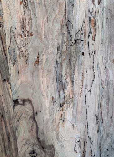 Spalted Pecan Texas Pecan Wood